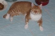 Я красивый рыжий кот - кто меня домой возьмет?